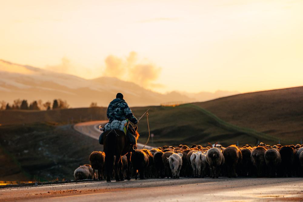 :新疆伊犁河谷哈萨克族牧民开启春季转场季